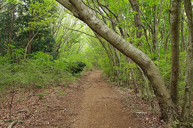 緑の木々のトンネル