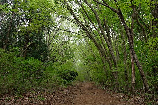 筑波山緑のトンネル